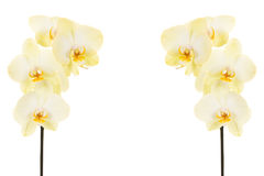Białe orchidee na trzonie Fotografia Stock