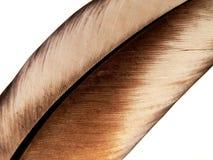 białe pióra ptaka Zdjęcia Stock