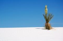 białe piaski parków narodowych Zdjęcia Royalty Free