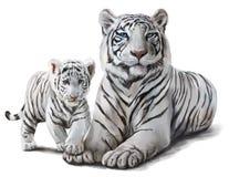 białe tygrysy Zdjęcie Royalty Free