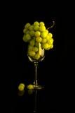 białe z winogron Zdjęcia Royalty Free
