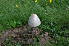 Białego grzyba góra Zdjęcia Stock