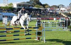 Białego konia przedstawienia doskakiwanie Zdjęcie Stock
