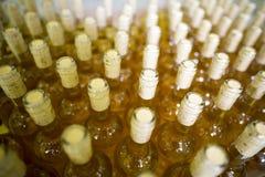 Białego wina butelki w wytwórnii win Fotografia Stock