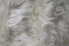 Biała futerkowa tekstura Fotografia Royalty Free