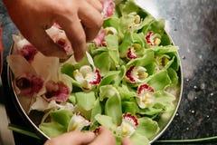biała i zielona orchidei dekoracja w stalowym talerzu Zdjęcia Royalty Free