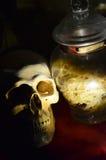 Biała istna czaszka z jadem Obraz Royalty Free