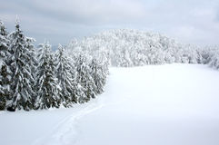 biała krajobrazowa zimy. Obrazy Royalty Free
