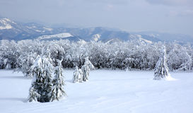 biała krajobrazowa zimy. Fotografia Stock