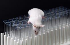 Biała lab myszy sztuka na tubkach Fotografia Royalty Free