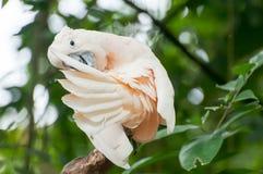 Biała papuga obraz stock