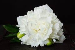 Biała peonia na drewnianym stole Obraz Royalty Free