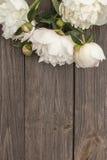 Biała peonia na drewnianym tle Zdjęcie Stock
