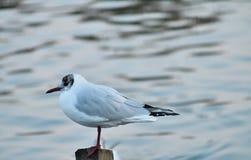 Biała ptasia pozycja Obraz Stock