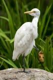 Biała ptasia pozycja Zdjęcie Stock