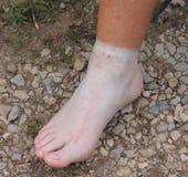 Biała stopa Zdjęcie Stock