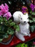 Biała wiewiórka w kwiaciarnia sklepie Obrazy Royalty Free