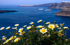 Biała wiosna kwitnie na brzeg wyspa Santorini Gr Obrazy Royalty Free