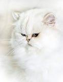 biały Fotografia Royalty Free