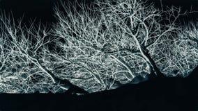 Biały abstrakcjonistyczny drzewo Obraz Royalty Free