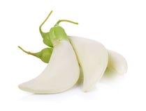 Biały Agasta, Tajlandzki warzywo na bielu Zdjęcia Stock