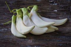 Biały agasta warzywo Zdjęcie Stock