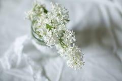 Biały bez na wazie w okno Fotografia Stock