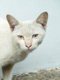 Biały bezdomny kot fotografia stock