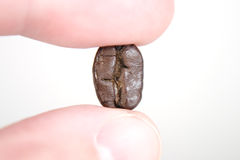 biały bobowi kawowi palce Obraz Stock