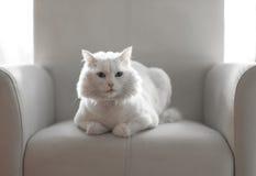 Biały czekanie Zdjęcie Stock