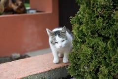 Biały domowy kot plenerowy Fotografia Royalty Free