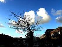 Biały drzewo Obrazy Royalty Free