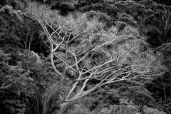 Biały drzewo Fotografia Royalty Free