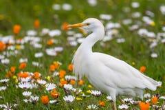 Biały Egret i colourful kwiaty Zdjęcie Stock
