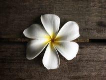 Biały frangipani na drewnianym boardwalk tle obraz stock