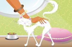 Biały kot Fotografia Stock