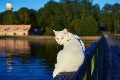 Biały kot na drewnianym moscie Zdjęcia Royalty Free