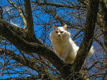 Biały kot na drzewie Fotografia Stock