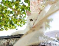 Biały kot na stole z komarnica szalikiem 1 obraz stock
