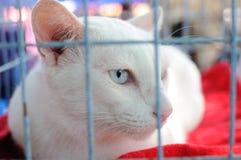 Biały kot w klatce Zdjęcie Royalty Free