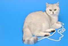 Biały kot z koralikami Zdjęcie Royalty Free