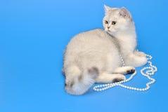 Biały kot z koralikami Zdjęcia Stock