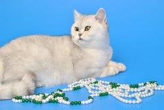 Biały kot z koralikami Obraz Stock