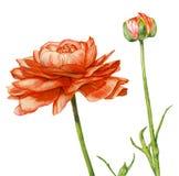 Biały kwiat royalty ilustracja