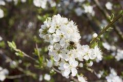 Biały kwiat Zdjęcia Royalty Free