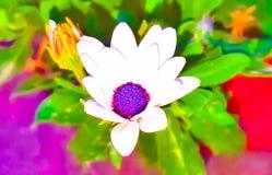 biały kwiat! Obrazy Royalty Free
