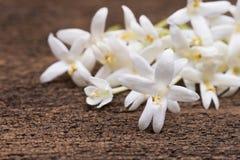 biały kwiat Korkowy drzewo, indianina korek (Millingtonia hortensis L Fotografia Royalty Free