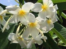 Biały kwiat w ogródzie Zdjęcie Stock