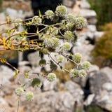 biały kwiat w trawy i abstrakta tle Zdjęcia Royalty Free