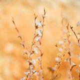 biały kwiat w trawy i abstrakta tle Obraz Royalty Free
